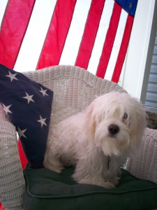 """BREEZY"" The First State's Cutest Patriot on Memorial Day 2011"