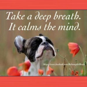 deep-breath-dog